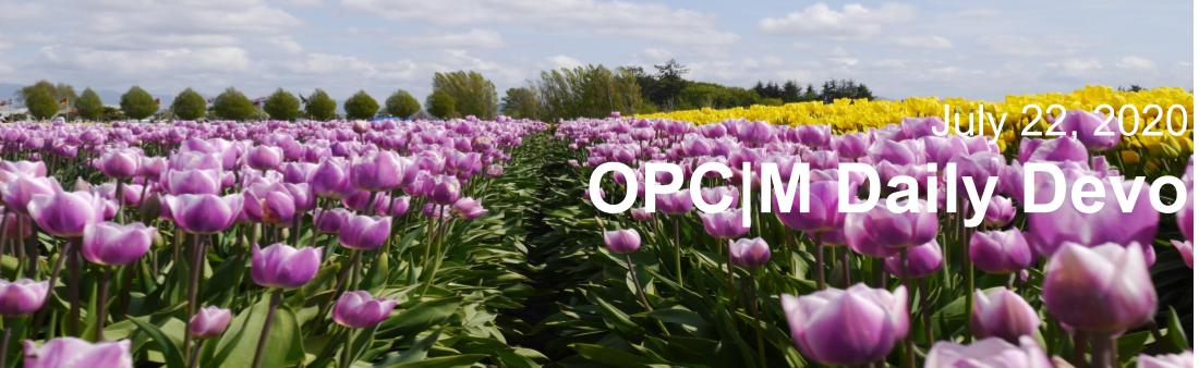 """A field of purple and yellow tulips with the text, """"July 22, 2020. OPCM Daily Devo""""."""