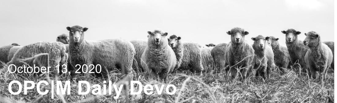 """Sheep with the text, """"October 13, 2020. OPCM daily devo."""""""