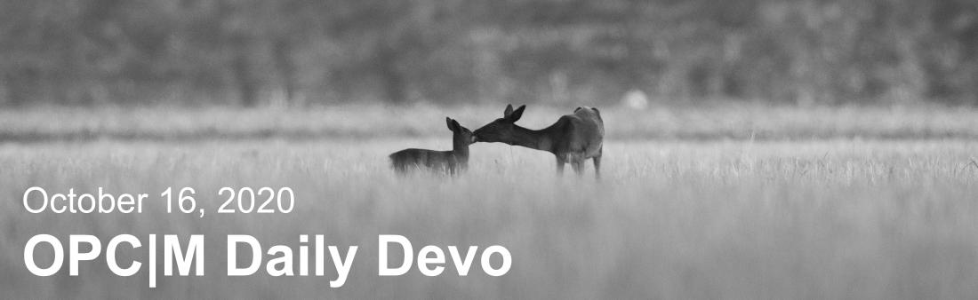 "A black and white picture of two deer in a field with the text, ""October 16, 2020. OPCM daily devo."""