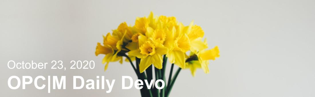 "Yellow daffodils with the text, ""October 23, 2020. OPCM daily devo."""