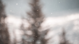 Out of focus pine trees.