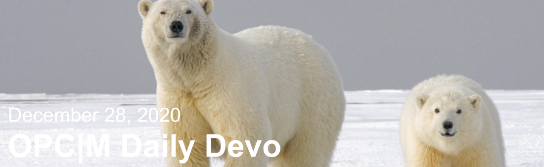 "Polar bears with the text, ""December 28, 2020. OPCM daily devo."""