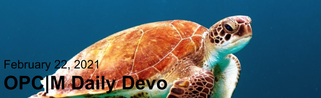 """A sea turtle with the text, """"February 22, 2021. OPCM daily devo."""""""