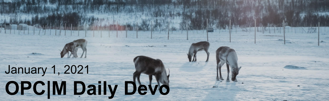 "reindeer grazing in a snowy field with the text, ""January 1, 2021. OPCM daily devo."""