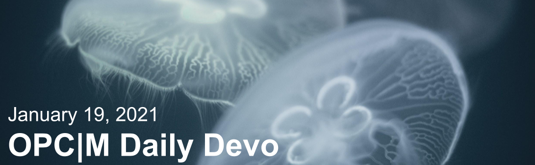 """Jellyfish with the text, """"January 19, 2021. OPCM daily devo."""""""