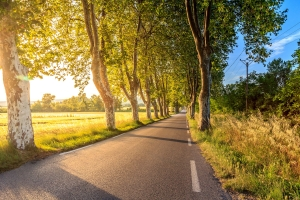 A road lined with trees.