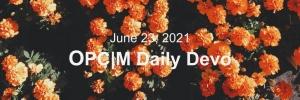June 23rd devo image, orange flowers with dark green leaves.