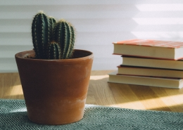 June 14th devo image, a cactus and books on a table.
