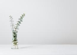July 19th devo image, plants in a jar.