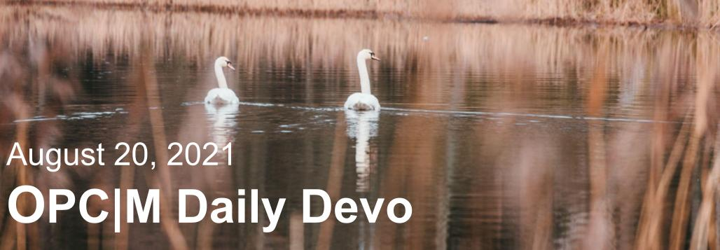 August 20th devo image, two swans.
