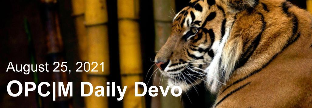 August 25th devo image, a tiger.