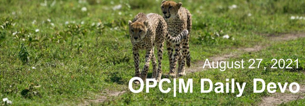 August 27th devo image, two cheetahs.