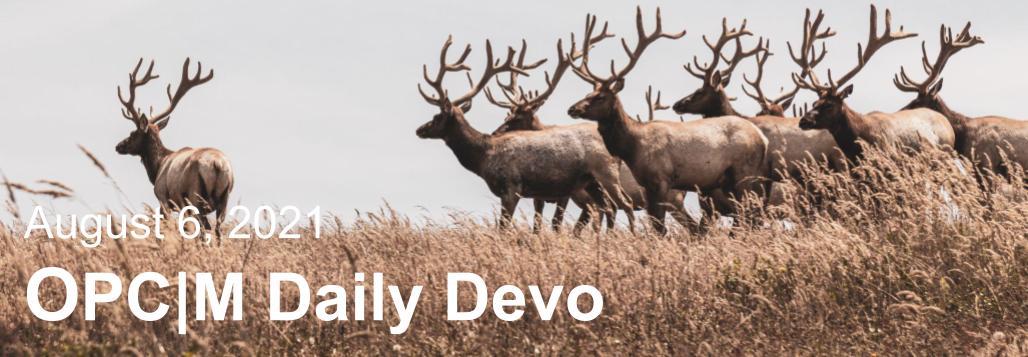 August 6th devo image, elk in a grassy field.
