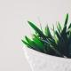 July 28th devo image, a plant in a white pot.