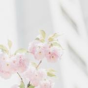 July 27th devo image, light pink flowers.