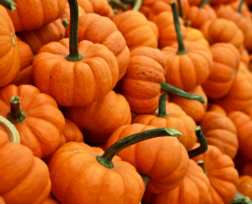 October 18th devo image, orange pumpkins.