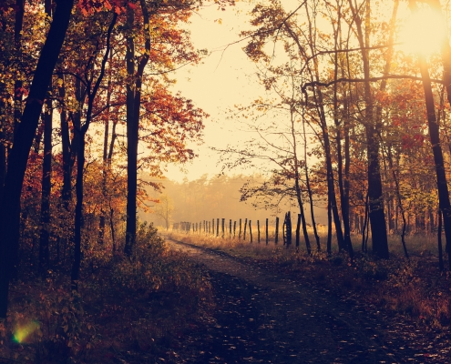 October 15th devo image, a wooden fence along a dirt road.