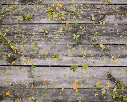 October 12th devo image, wooden planks with leaves.